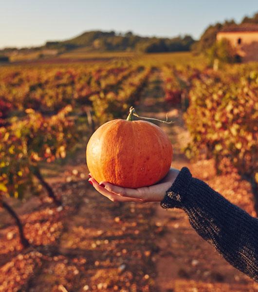 Agro-alimentaire Vaucluse @ Coquard